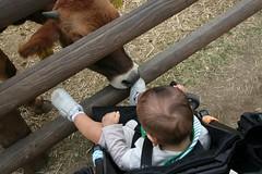 牛に食べられる