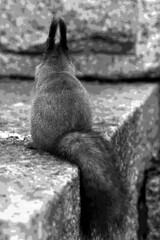A Posterized Posterior (TomiTapio) Tags: blackandwhite bw cemetery photomanipulation iso800 helsinki squirrel orava tame posterize écureuil hietaniemi sciurusvulgaris sqrl eurasianredsquirrel kurre canonef70210mmf4