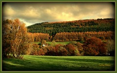 684. A symphony of colour ..... (fleetingglances) Tags: autumn trees fall woodland colours creation golds symphony fiery rubyreds orangesgods