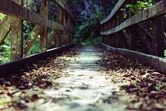 (chrispapsmear) Tags: california wood bridge chris plants nature leaves forest canon rebel bay woods san francisco natural f14 diego muirwoods area baja mm 50 mira muir mesa pappas t3i baja california san francisco diego rea mira mesa baya