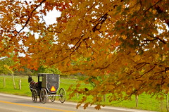 Going Home (nebulous 1) Tags: autumn ohio horse fall nature landscape photography nikon amish transportation goinghome buggy middlefield amishcountry nebulous1