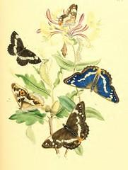 5butterflies4
