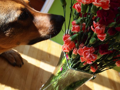birthday flowers with Denny's nose