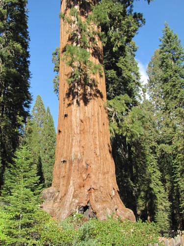 IMG_4065_Grant_Grove_Sequoia_NP