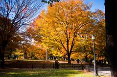 Burst of Color @ Central Park, NY (anks79) Tags: park nyc newyorkcity newyork tree fall colors season nikon centralpark manhattan fallfoliage 18200mm d90