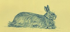 Kortrijk  Broelmuseum (Paul Gosselin - Belgian artist) Tags: blue rabbit art animal pencil belgium belgie konijn drawing kunst fineart dier kortrijk tekening flemishschool menen gosselin broelmuseum foxrabbit paulgosselin