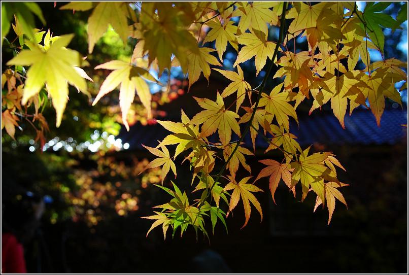 我也去過福壽山囉