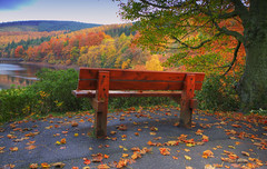 autumnal morning theatre (gobayode photography...times) Tags: fall nature fallcolors derbyshire autumncolours naturecolours upperderwentvalley enjoyfall upperderwentautumn benchinautumn benchinfallcolors afallscene enjoyautumn derwentautumn ladybowerautumn