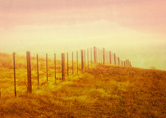 Dreaming of Fence Friday (wowography.com) Tags: autumn sky bird texture nature grass silhouette yellow skyline clouds fence photography golden nikon colorado warm hill boulder goose dreaming explore handheld friday lightroom cep hff 2011 18200mm d90 wowography cs5 63640 rubyblossom annagay longislandphoto tomreese adobelightroom3 tr11787 wowographycom