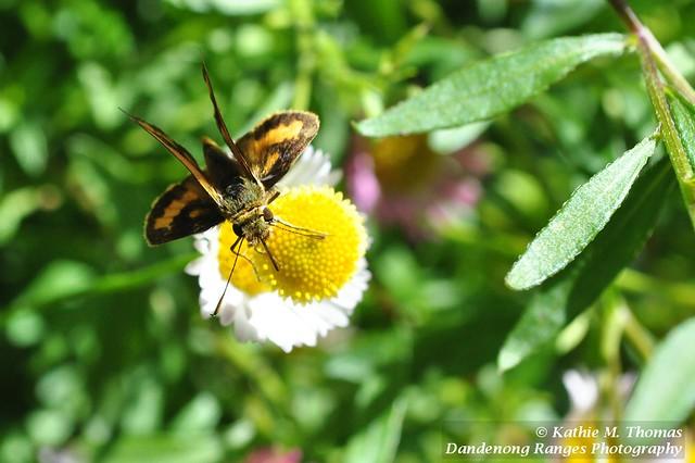 320-365 Small moth on flower