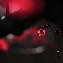 (moriyu) Tags: plant flower japan nikon  kanagawa  kawasaki    colorphotoaward d700