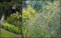 Chinese Garden (Salicia) Tags: flowers flower macro nature gardens fauna garden scotland flora gardening blossoms perthshire foliage ornaments chinesegarden blooms naturalworld floraandfauna floraldisplay gardenornaments gardenflow