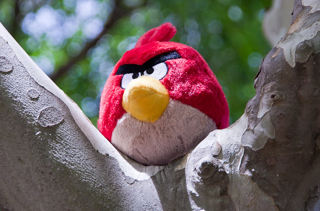 Angry Bird wildlife