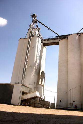 Wolf grain elevator - Deerfield, Kan.