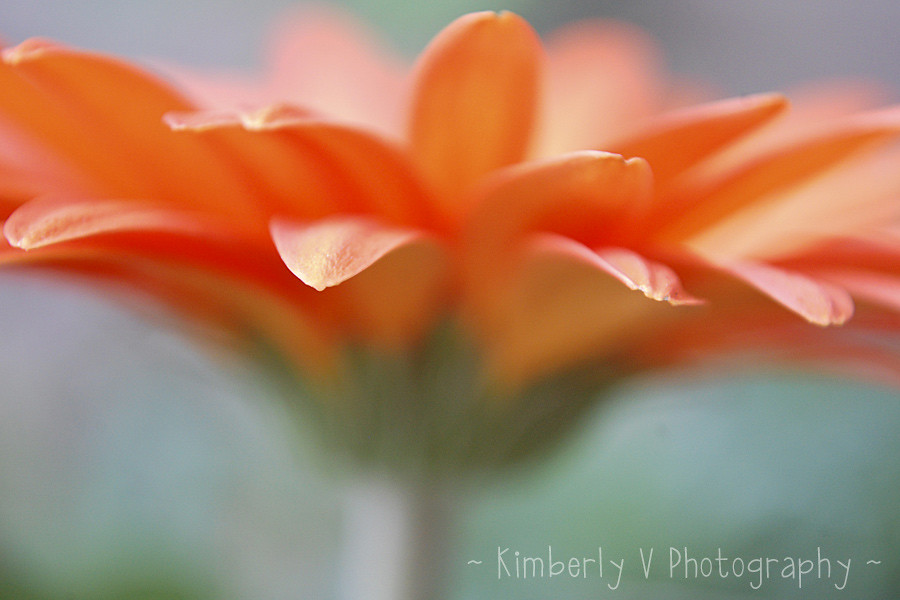 Week 39 - Orange edited - aperture and DOF