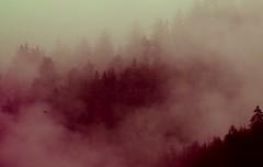 Nebel in den Bergen (kerstin kirschrot) Tags: morning autumn mountain alps fall berg fog clouds forest nebel herbst wolken berge alpen melancholy outlines wald bume morgen baum tanne umrisse artlibre artlibres stereomoodbkg