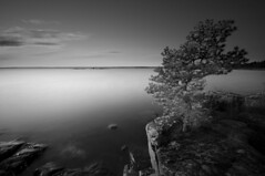 Silver tree (- David Olsson -) Tags: longexposure sunset blackandwhite bw lake nature water monochrome landscape mono nikon rocks sweden tripod sigma calm cliffs le lonely 1020mm vnern vrmland lcw silvertree ndfilter lakescape smoothwater skoghall lonesometree d5000 davidolsson nd500 lightcraftworkshop 2exposuremanualblend ginordicoct