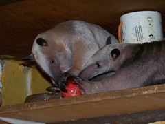 Pua and Ori sharing an apple