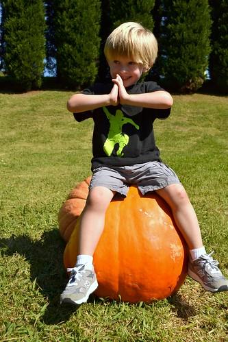 dylan pumpkin