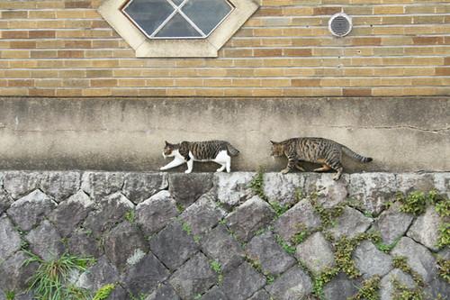 Kamogawa 2 cats
