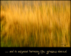 In Autumnal Hamony the Grasses Danced (Imagemakercan - The Lensdancer) Tags: autumn colour texture golden afternoon dancing autumncolours harmony slowshutter grasses ndfilter joygerow lensdancerstudios