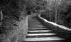 Pont du Gard (alpha du centaure) Tags: macro architecture photos picture images du olivier dmc gard photographe visuels photosofart lumixpanasonic naturalphotos dmcfz18 alphaducentaure photosartistique stephanemarechal photosdenature photosdart photosartistic fz38panasonicphotographerpont