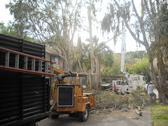 large-tree-trimming-near-house-venice-florida-7 (Quality Tree Service of Sarasota) Tags: venice plant tree landscape concrete design dangerous oak florida crane landscaping quality lawn large commercial repair installation maintenance hauling cutting service sarasota walls trimming removal residential privacy condominium planting sod pruning osprey mulch sprinklers removals nokomis fertilization