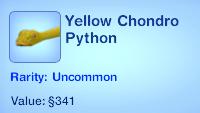 Yellow Chondro Python