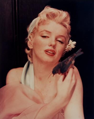 Marilyn Monroe by greta_g