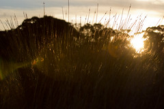 Sunset though the tall grass (JimmyBBlaze) Tags: park sky sun water fountain grass digital spring bush nikon glare afternoon path sydney sigma sunny australia clear filter walkway 200 nsw flare mm olympic shrub setting 70 70200 sprouts circular between pro1 cpl hoya pl d3100