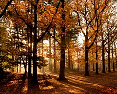 Caught some morninglight (Just me, Aline) Tags: autumn light holland netherlands forest licht morninglight herfst nederland explore breda bos ochtendlicht mastbos