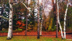 Autumn trees (blmiers2) Tags: autumn trees orange white newyork green fall nature colors nikon coolpix s3000 saveearth blm18 blmiers2
