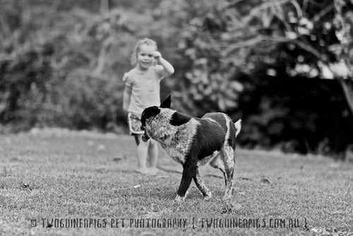 5. twoguineapigs-_MG_4087-bw-taylor+fosters by twoguineapigs pet photography