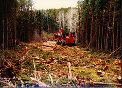 SWH (The Koehring Guy) Tags: wood trees ontario canada forestry timber logs harvester shortwood koehring