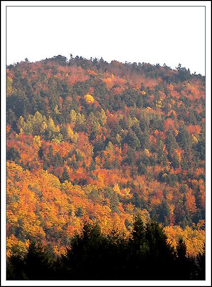 l'automne express - Page 4 6305564586_2f39786c6f_z