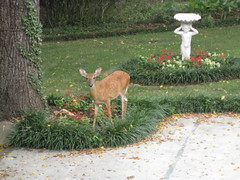 "Deer2 • <a style=""font-size:0.8em;"" href=""https://www.flickr.com/photos/69122677@N02/6307693912/"" target=""_blank"">View on Flickr</a>"