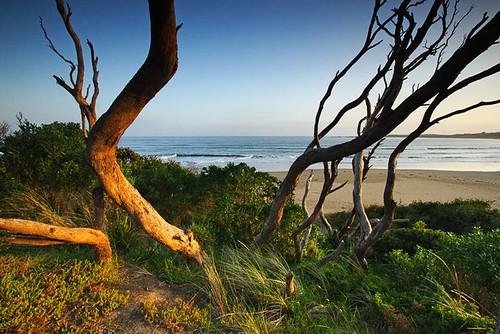 Anglesea, Victoria, Australia IMG_3180_Anglesea