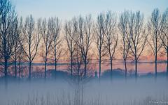 Magical evening3 (jacobsfrank) Tags: winter sunset landscape sneeuw natureplus beverenindesneeuw2010