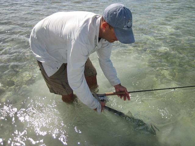 Bahamas bonefish release