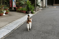 (2)   () Tags: japan cat 50mm tokyo nikon   dslr fx  yanesen  yanaka 5014   d700