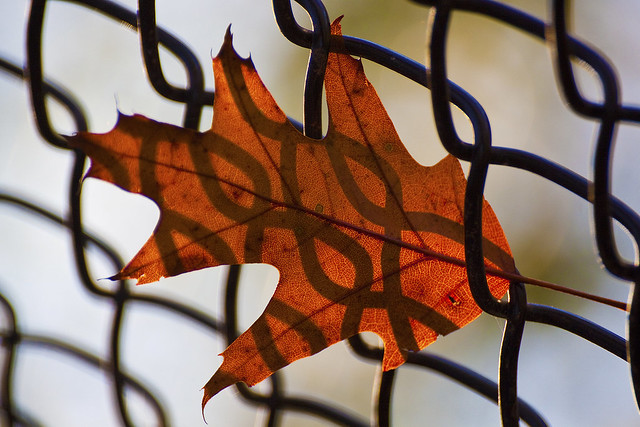 fence shadow in leaf2