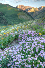 Wasatch Mountains Utah (Utah Images - Douglas Pulsipher) Tags: travel flowers summer usa mountains flower tourism nature forest spectacular rockies utah spring scenery wasatch view natural scenic meadows rocky environmental location tourist alpine views bloom northamerica flowering environment wildflowers blooms wilderness peaks lupine attraction springtime blooming pristine unspoiled undeveloped mountainous devilscastle albionbasin