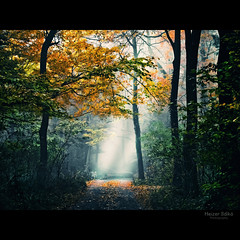 I reach the light / elrem a fnyt (heizer.ildi) Tags: autumn trees light leaves forest woodland woods hungary termszet fa tj fny kd tjkp t sz erd canonsx10