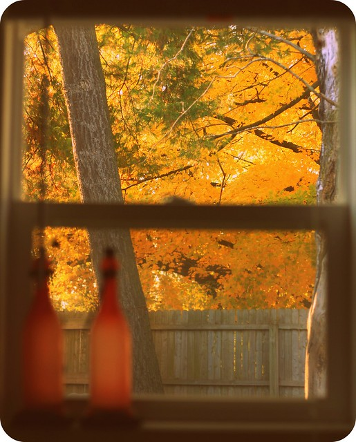 backyard autumn