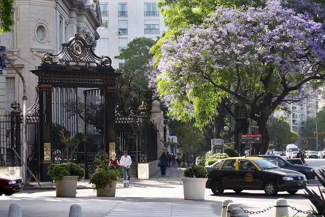 Jacaranda en Buenos Aires 021