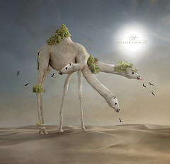 Trick the camel (suliman almawash) Tags: art digital photoshop kuwait suliman   idream     almawash