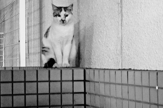 Today's Cat@2011-11-13