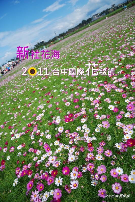 2011_1113_新社花海_cover