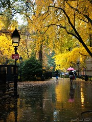 Autumn at City Hall Park (CVerwaal) Tags: nyc newyorkcity autumn newyork fall colors rain lumix panasonic autumncolors umbrellas autumninnewyork panasonicg3 leicadgsummilux25f14