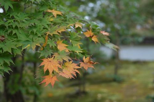 京都をめぐる冒険 永観堂